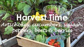 Edible Backyard Garden | Garden Tour | Harvest Time | Gardening In Los Angeles || May 2019