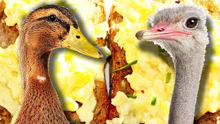 Which Egg Makes The Best Scrambled Eggs? - Video Youtube