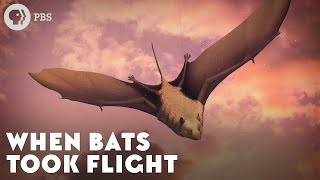 When Bats Took Flight