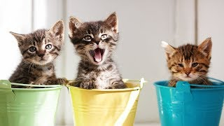 Funniest And Cutest Kittens - Try Not To Say Aww Challenge