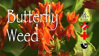 Butterfly Weed: Poison, Medicinal & Other Uses