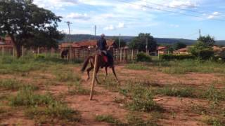 Equídeo Equino Mangalarga Não Registrado Cavalo Alazã Marcha Picada - e-rural Imagens