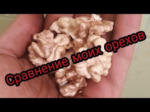 Молдавские саженцы Киктенко - это лучшее, что у меня есть.