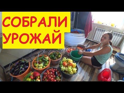 ПОДАРОК ОТ СОСЕДА / Деревенские будни / Собрали урожай / Привезли сено / Семья в деревне