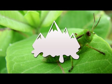 Download Crickets Silent Sound Effect Video 3GP Mp4 FLV HD Mp3