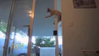 Spider Cat mission impossible
