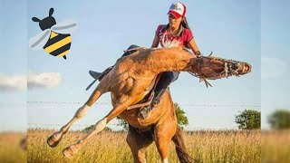 Hoje é Dia Delas, Das Cowgirls Abeia 😂