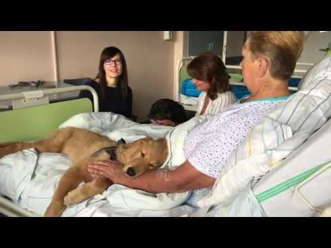 Video: Oblíbené canisterapie v Nemocnici Valašské Meziříčí nově je obohatí štěňátko Bella