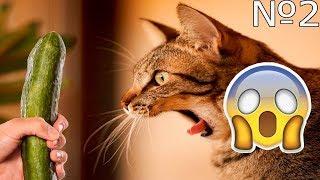 СМЕШНОЕ ВИДЕО ПРО КОШЕК 2017 ЧАСТЬ 2/ FUNNY VIDEOS ABOUT CATS 2017 PART 2