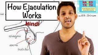 ejaculated meaning in urdu - Thủ thuật máy tính - Chia sẽ