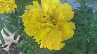Моя дача в августе / обзор сада огорода теплиц