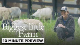 The Biggest Little Farm | 10 Minute Preview | Own it now on Blu-ray, DVD & Digital