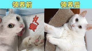 流浪猫被收养一年后的变化,晋升大姐大还胖成了球