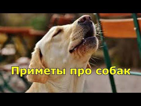 Приметы про собак.