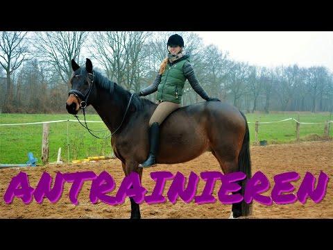 Trainingstagebuch !? I Faltonyano reiten I Pferd antrainieren