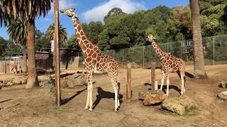 Oakland Zoo , 7th January, 2018