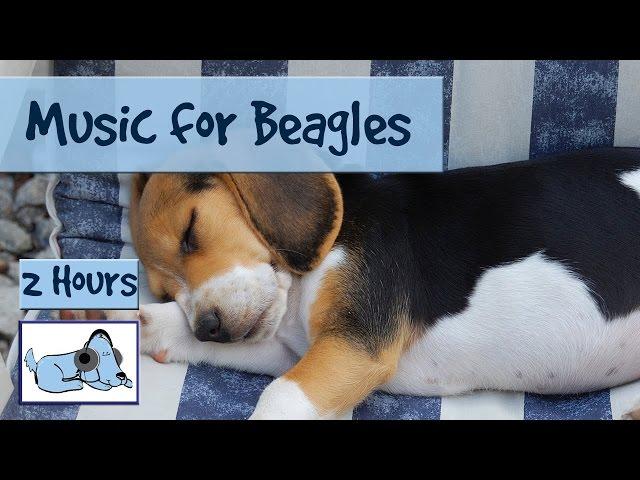 Calming-music-for-anxious-beagles