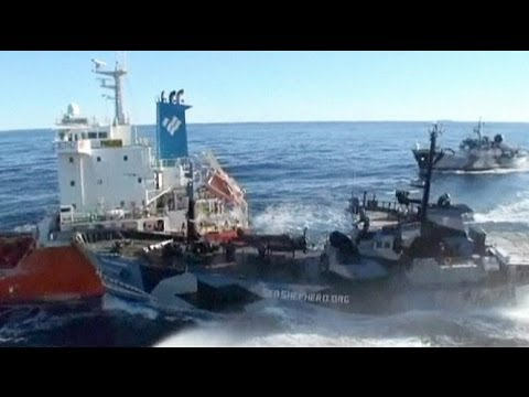Kharkiv per comprare rotule per inverno a pesca