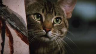 Stephen Kings Cats Eye - Original Theatrical Trailer