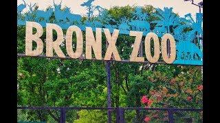 Bronx Zoo Complete Tour New York #bronxzoo #NewYork