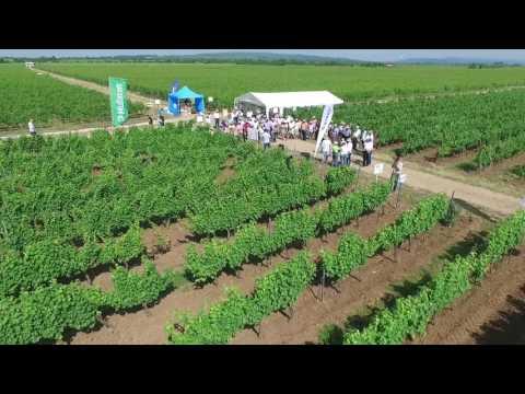 Agro Fest - Dragosloveni, Vrancea