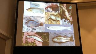 Western Society of Naturalists Conference talk - Tidewater goby ecology and management