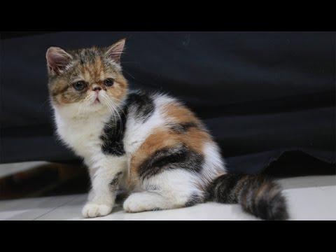 Video Cara Agar Makanan Kucing Tidak Disemutin
