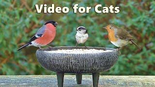 Videos for Cats to Watch Birds - Garden Bird Extravaganza - 8 Hours NEW ✅