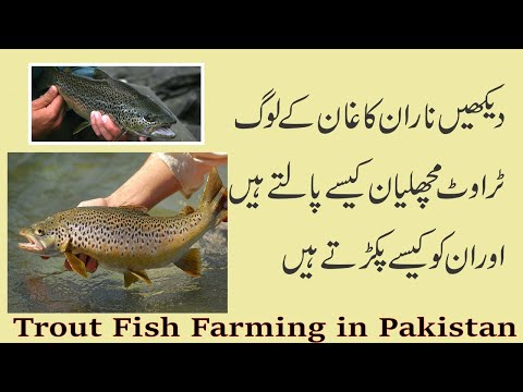 , title : 'Trout Fish Farming in Pakistan | How to Start Fish Farm | Fish Business