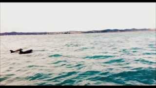 preview picture of video 'Dolphin Swim in the Bay of Islands, New Zealand'
