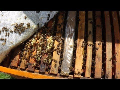 Расширять пчелиное гнездо на пасике или ???