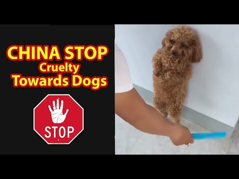 Dog Cruelty In China.. They Endure A Lot Of Pain To Walk Like This