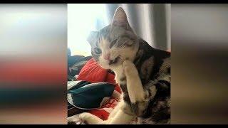 Приколы с животными февраль 2019 #27 Смехотворные видео смотреть про кошек, смешные видео про котов