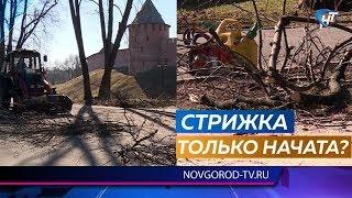 Новгородцев утром взволновал визг бензопил в Кремлевском парке