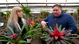 How to Care for Bromeliads   KSL Greenhouse