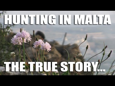 Hunting in Malta – The True Story
