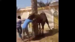 Funny Videos Compilation 2015. Funniest Videos - Funny Home Videos, Funny Animal, Humor, Comedy.