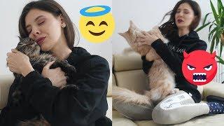 Zabawne różnice pomiędzy moimi kotami 🐱