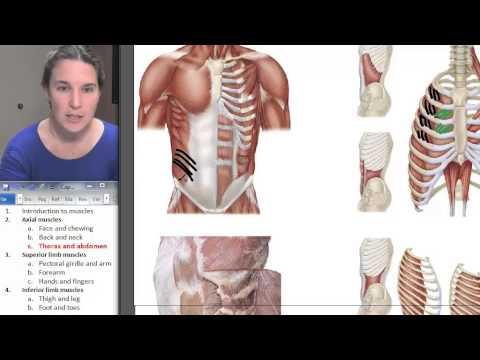 Les sensations désagréables dans les muscles du ventre