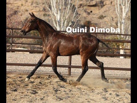 Quini Dimoba II (Publicado 10-2-2018)