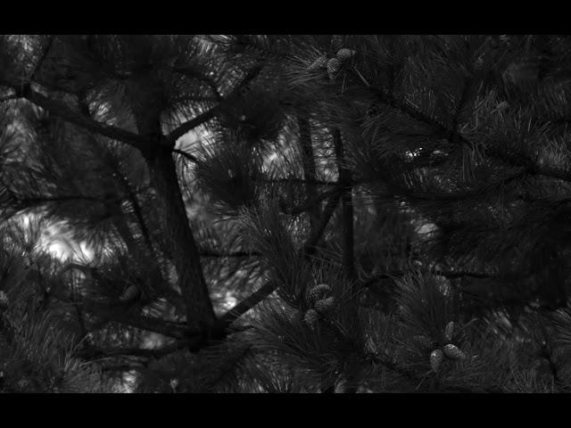 Example clip from MC023MG-SY