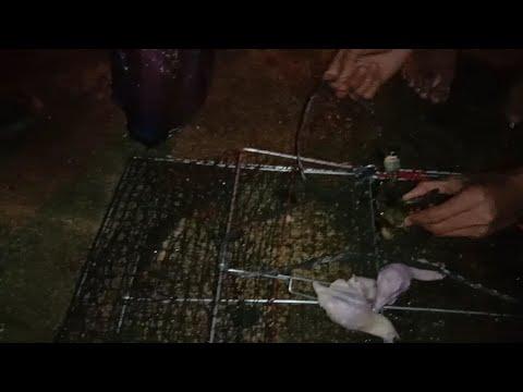 #VLOG# MENANGKAP KEPING DI PANTAI ULELEE ACEH PADA MALAM HARI # KEPITING #