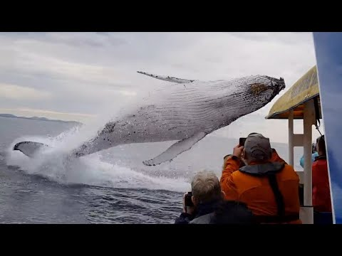 Whale jumps out of nowhere during sight seeing tour.