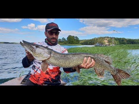 Trofeo che pesca crucian