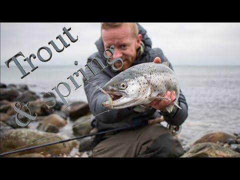 Fly fishing for sea run brown