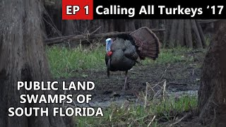 Florida Public Land Osceola Hunt - Calling All Turkeys