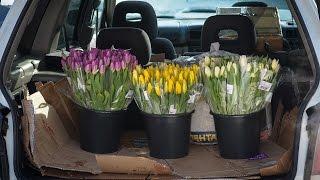 Idea Pro - в деле... Очередная идея. Продажа тюльпанов.