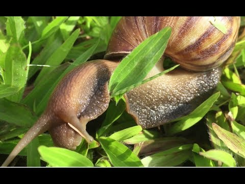 Worm at giardia paggamot