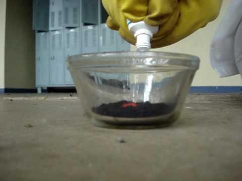 A paraziták testének tisztítása terhesség alatt