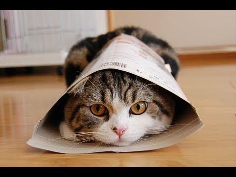 قطة مضحكة